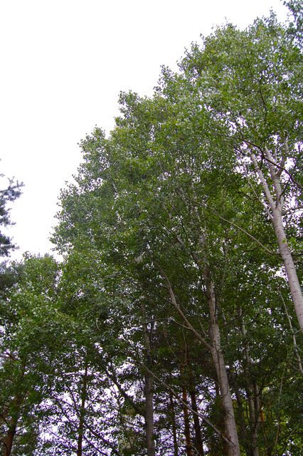 What's around Whispering Aspens - 6 Br Home, Granby